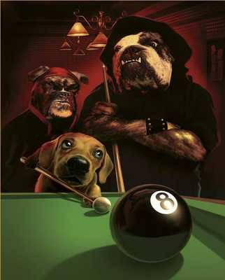 Billiards Dog Pictures